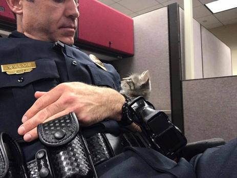 Полицейский всю ночь обнимал бездомного котёнка, чтобы спасти его от одиночества — ФОТО
