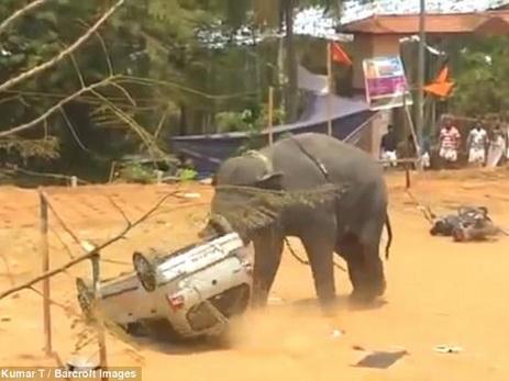В Индии слон устроил погром на фестивале — ФОТО — ВИДЕО