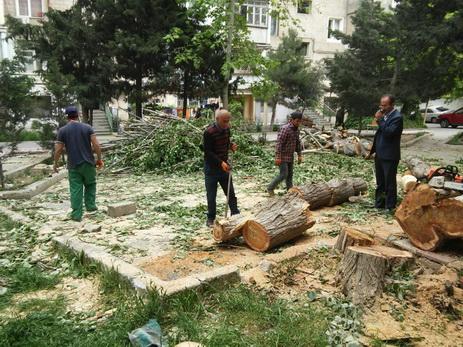 Возбуждено уголовное дело в связи с незаконной вырубкой деревьев в Хатаинском районе Баку