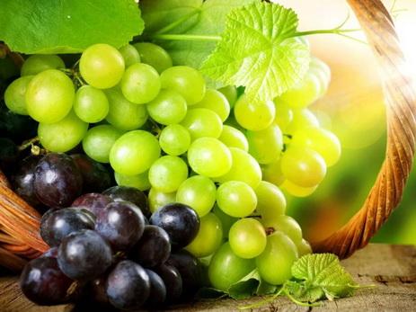 Садоводу из Азербайджана удалось вырастить виноград на Сахалине — ВИДЕО