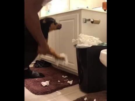 Хозяин заставил собаку собрать пережеванную туалетную бумагу — ВИДЕО