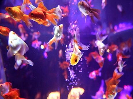 Убившего аквариумную рыбку американца посадили в тюрьму