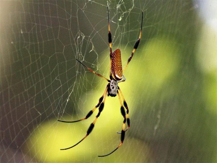 Нервы будут сшивать шелком пауков