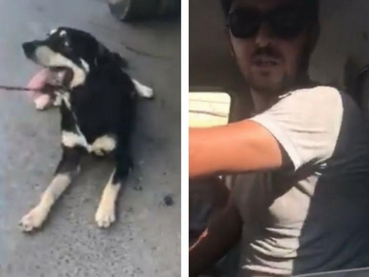 Наказаны живодеры, тащившие собаку волоком за машиной в Баку – ВИДЕО