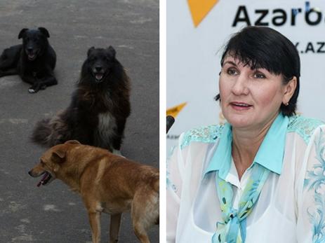 В Баку предложено кастрировать бездомных животных для снижения их популяции – ФОТО
