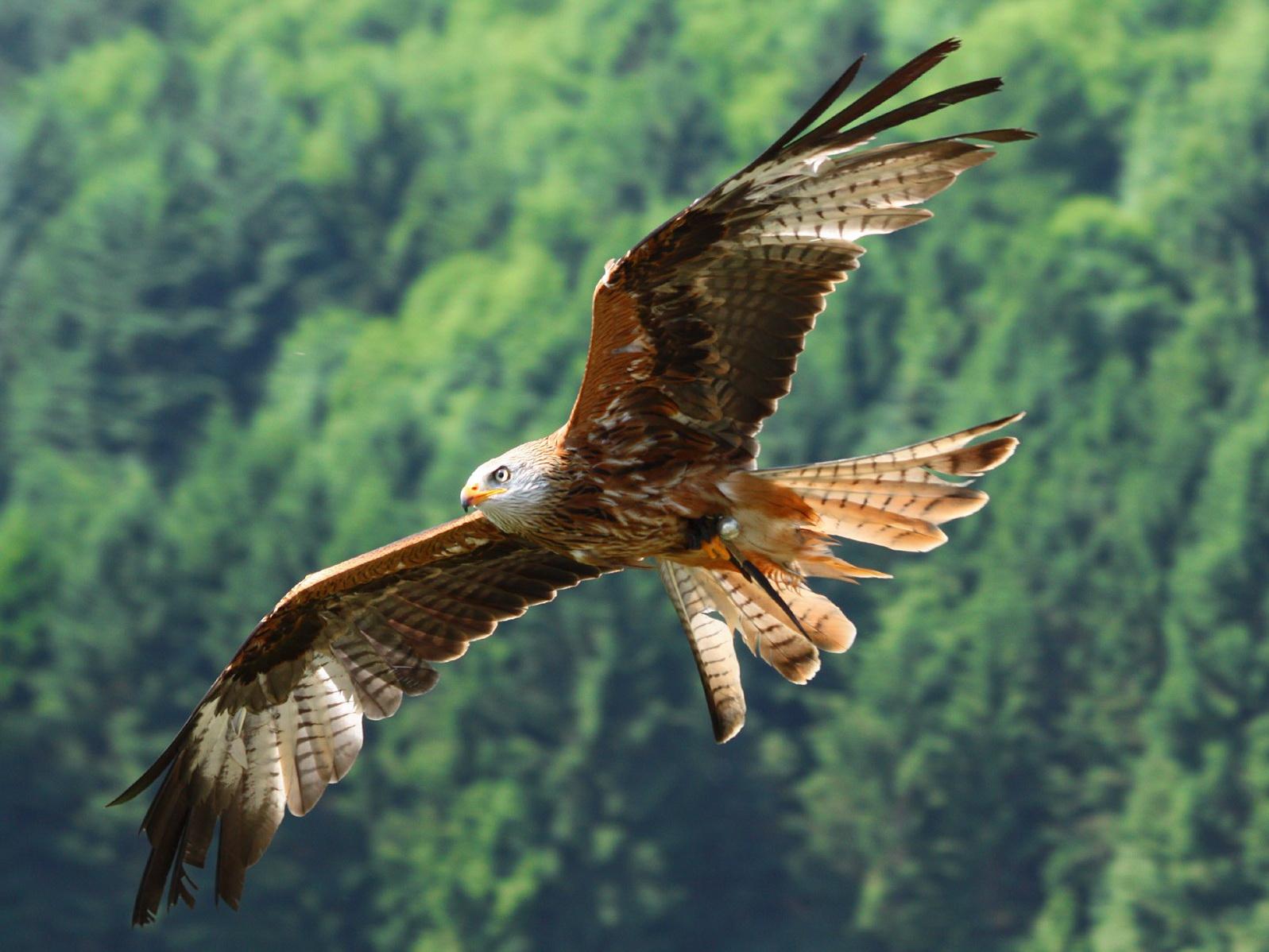 Сотрудники Минэкологии освободили из неволи редкую птицу