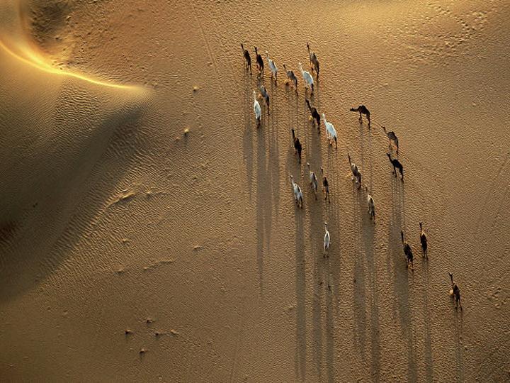В ОАЭ местный житель спас двух заблудившихся в пустыне туристов