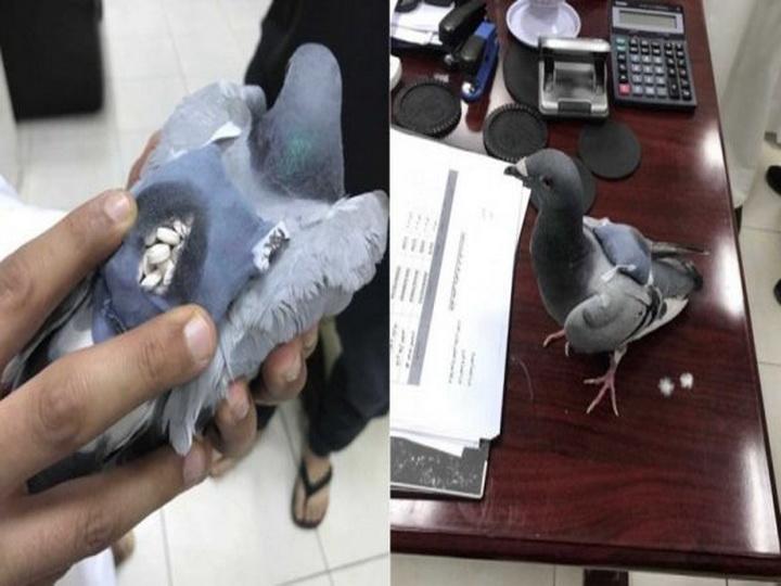 В Иране конфисковали почтовых голубей-наркодилеров