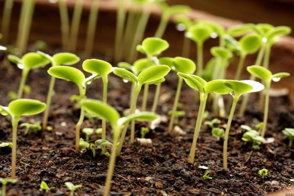 Повысить урожайность и плодородие почвы возможно с сульфат аммонием