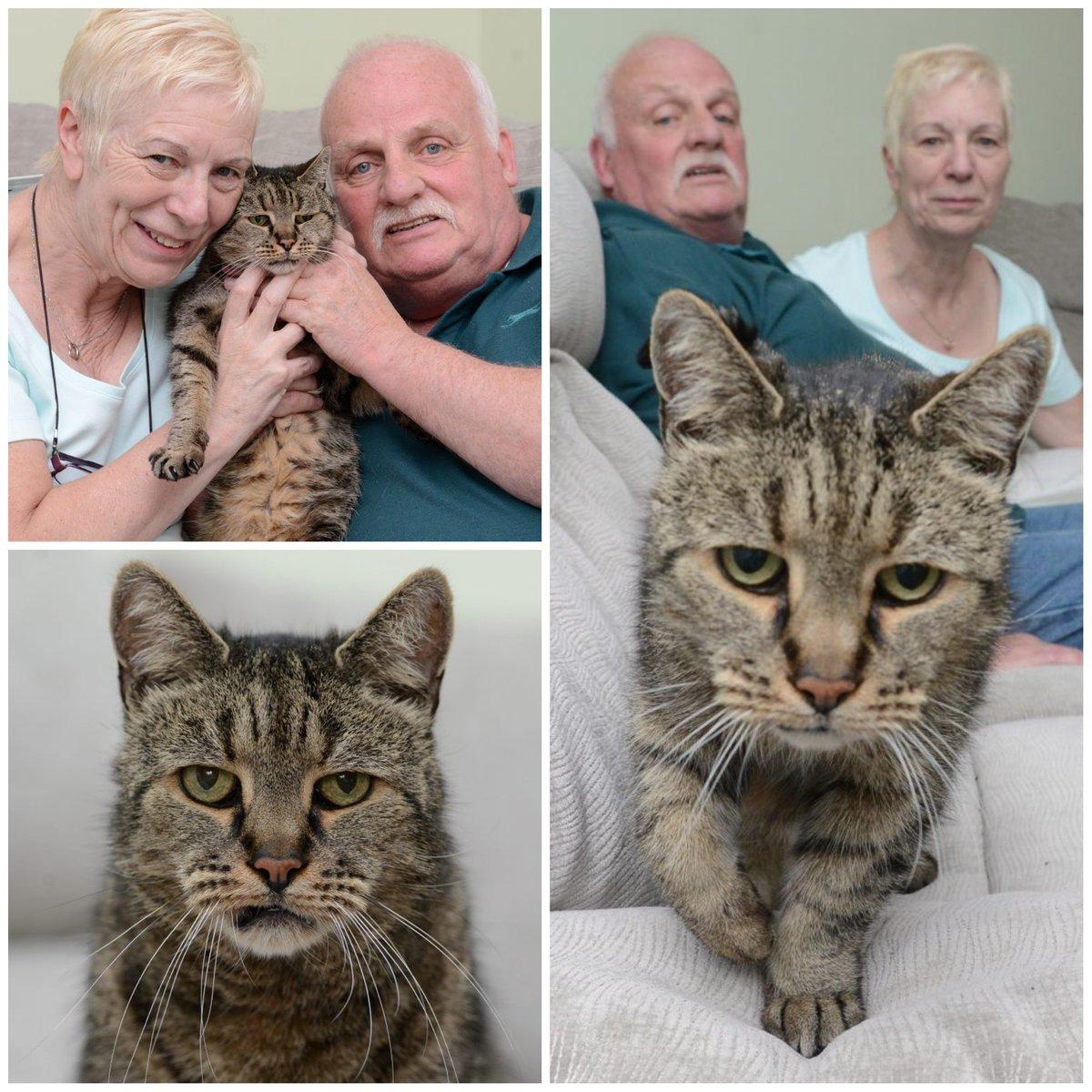 В Англии умер самый старый в мире кот - ФОТО