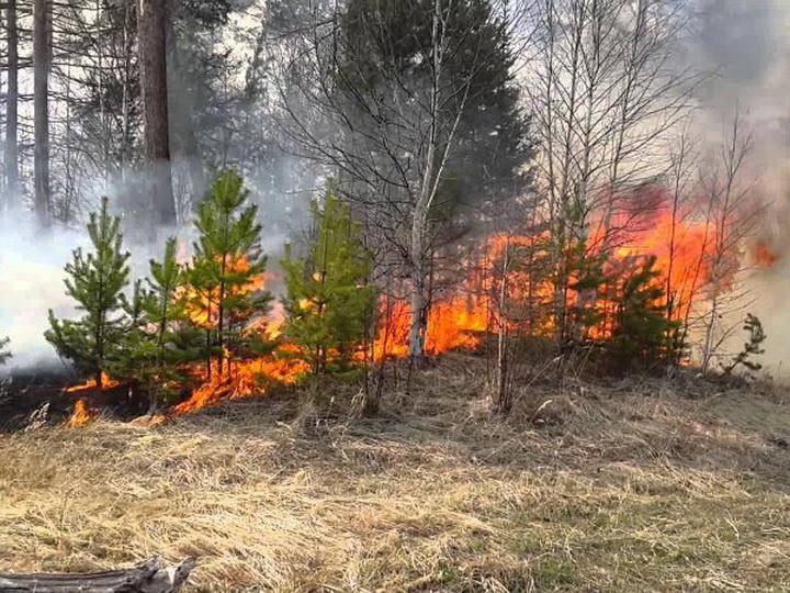 Минэкологии: Локализовано 80% лесного пожара в Габалинском районе
