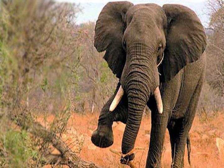 В Индии разъяренный слон затоптал любителя селфи