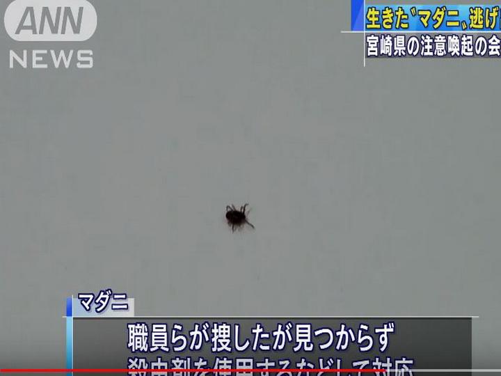 Смертельно опасный клещ сбежал от японских ученых на пресс-конференции