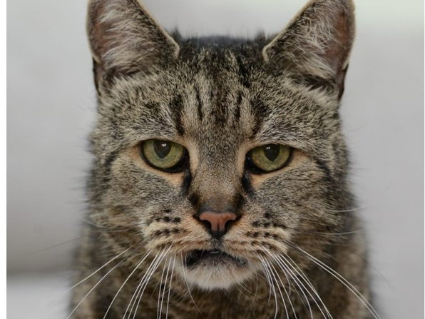 В Англии умер самый старый в мире кот — ФОТО