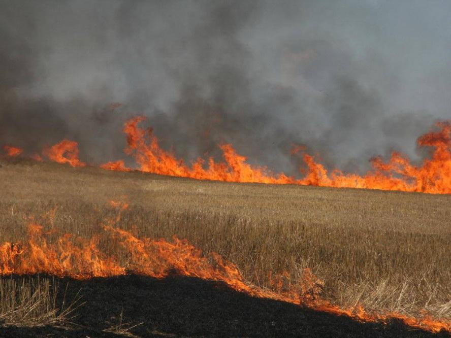 В Азербайджане введут штрафы за сжигание посевных участков