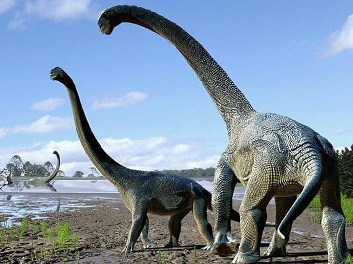 Учёные нашли самого большого древнего динозавра в мире