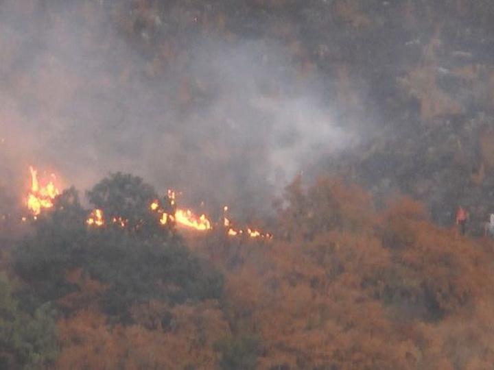 В Гахском районе вблизи лесополосы произошел пожар