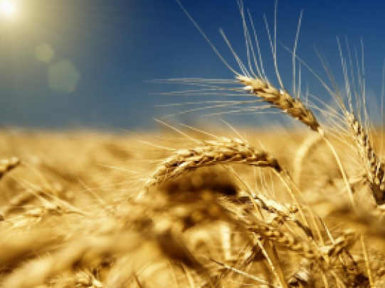 Азербайджан снизил импорт зерновых