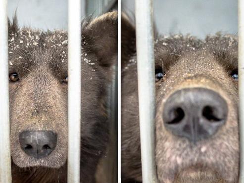 «Единственный в мире малыш медведопёс». Челябинцы гадают над породой собаки — ФОТО
