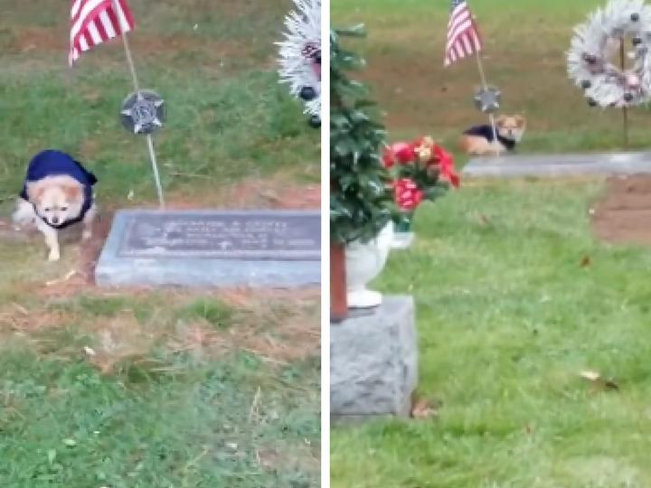 В США собака отказалась покидать могилу своего хозяина