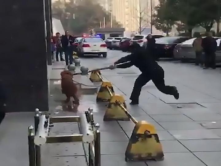 Очевидцы сняли шокирующее видео, как полицейский убивает собаку палкой - ФОТО - ВИДЕО