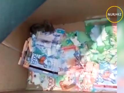 В Казахстане мыши погрызли деньги в банкомате — ВИДЕО