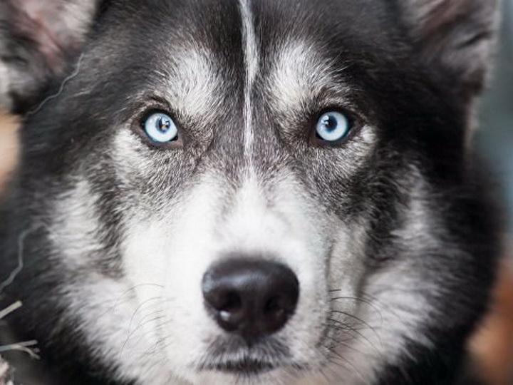 В США собаке одобрили пособие по безработице