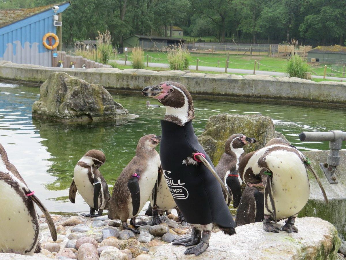 Самый модный пингвин Британии умер в возрасте 19 лет