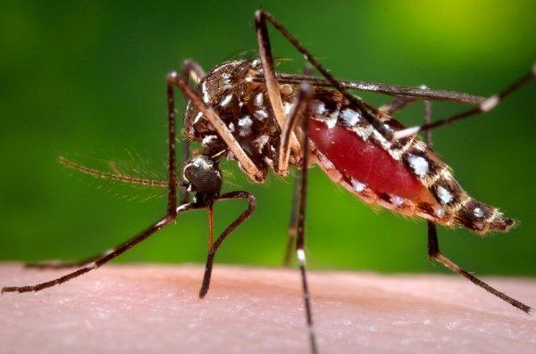 Жители Воронежской области жалуются на нашествие комаров