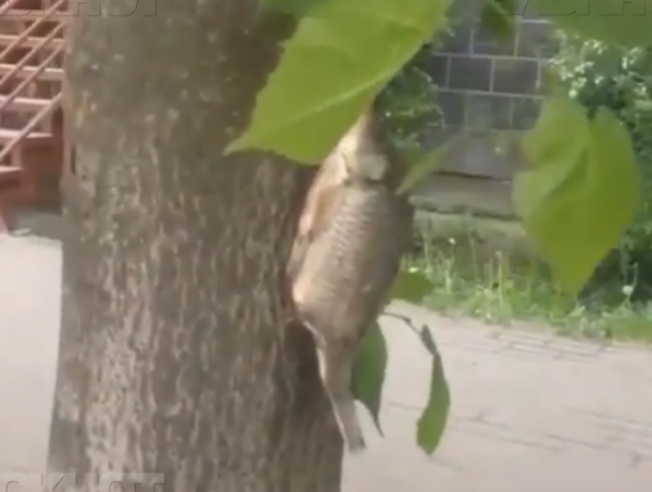 В центре Ростова растут рыбы на деревьях