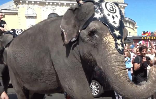 В Петербурге потребовали прекратить эксплуатацию животных в цирке