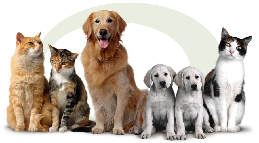Где в Петропавловске-Камчатском ветеринарные клиники