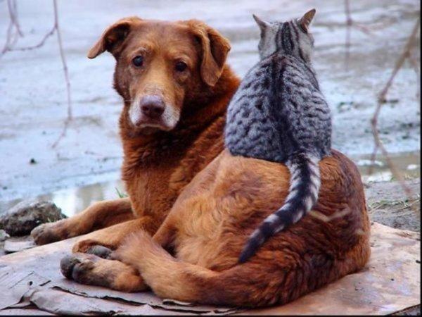 Сергей Бачин: Роза Хутор» заключил соглашение о сотрудничестве с Защиты и содержания животных «БИМ»