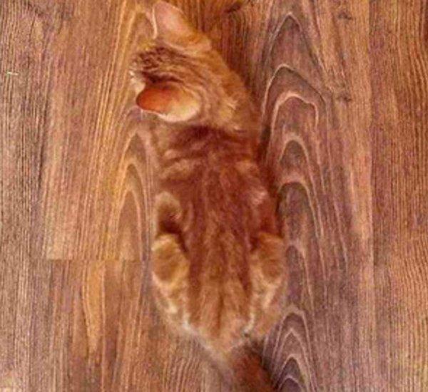 Слившийся с полом кот удивил пользователей Сети