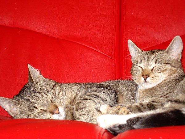 Пользователи «загнобили» котов за отравляющие жизнь шалости