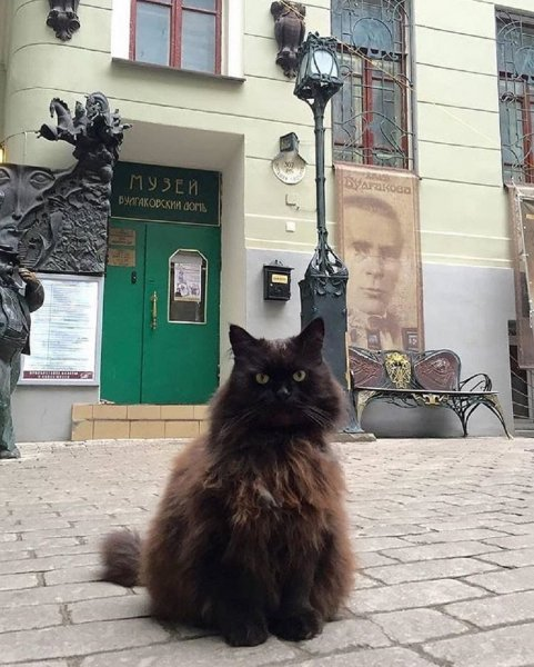 «Булгаковский дом» купит коту Бегемоту ошейник с GPS