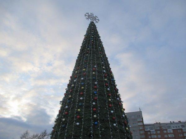 В этом году в Красноярке будет самая высокая в России ёлка