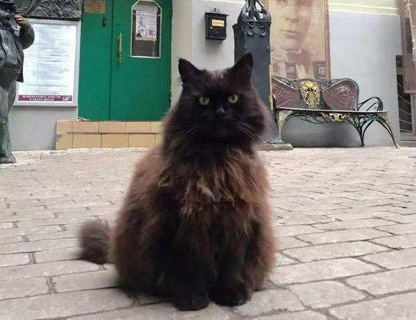 Похитительница кота Бегемота оправдалась за свой поступок