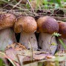 В Роспотребнадзоре проинструктировали по поводу сбора и хранения грибов