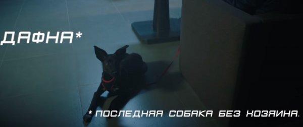К акции «Da!Животным» компания «Фокс-Экспресс» помогла снять социальный ролик