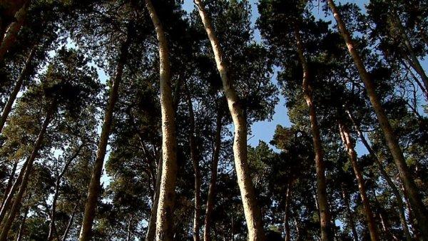 Аномалия в «пьяном» лесу поставила в тупик челябинцев