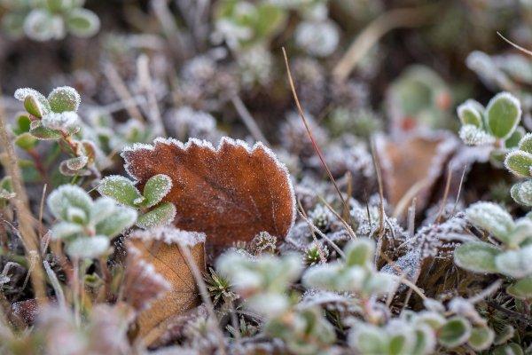 В Москве зафиксированы первые заморозки