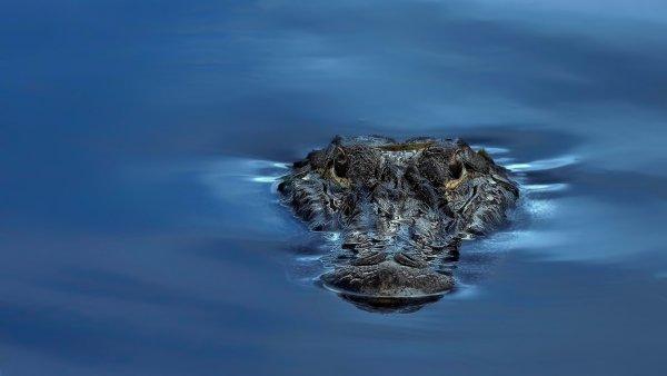 В Анапе выловили из Черного моря детеныша крокодила