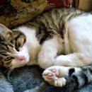 В Сети опубликовали объявление о продаже конкурента кота Ахилла за четыре миллиона