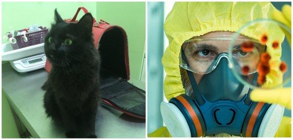 Биологическая атака в действии?: В Москве выбросили на улицу кота, зараженного опасным вирусом
