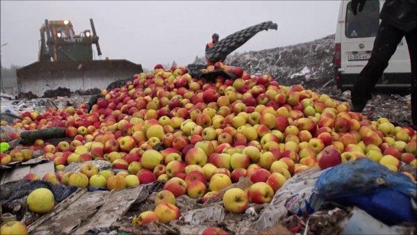 Русский — значит голодный: Пока тысячи россиян голодают, санкционную продукцию давят бульдозерами
