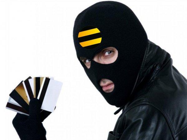 Пчела оказалась крысой?: «Билайн» с помощью сайтов-мошенников разводит клиентов на деньги – жертва