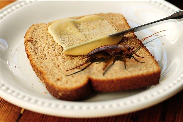 Членистоногая вкусняшка. Житель Волгограда купил в «Ленте» хлеб с тараканом