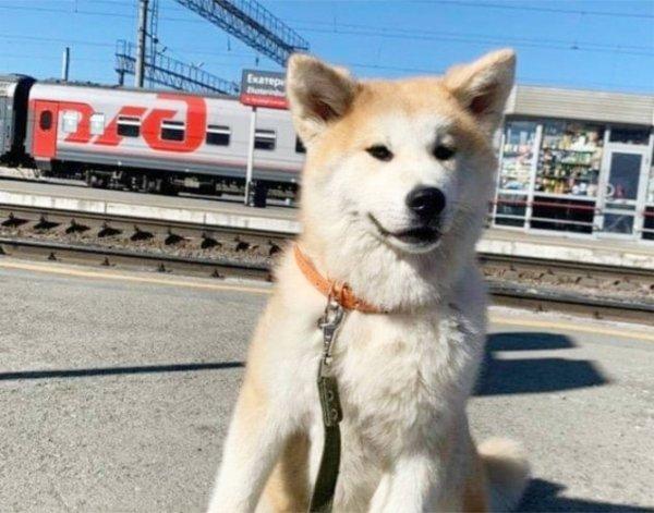 РЖД идёт по стопам «Почты России»? Проводники потеряли собаку при перевозке