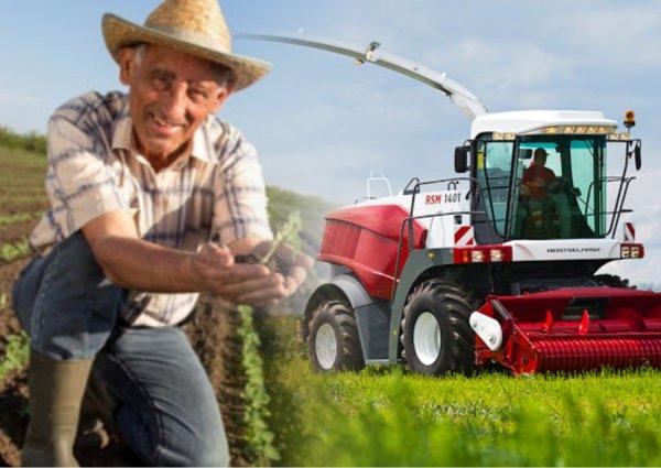 В Ростовской области начали выращивать коноплю легально